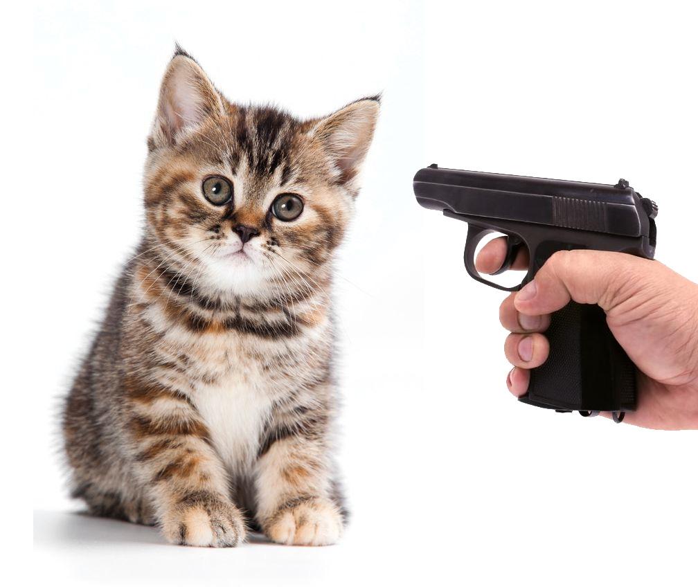 kittens with machine guns